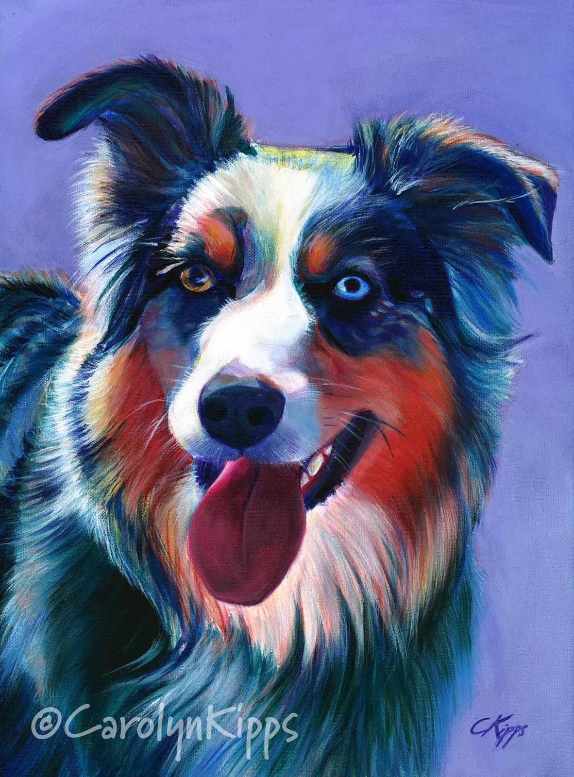 Bailey, australian shepherd