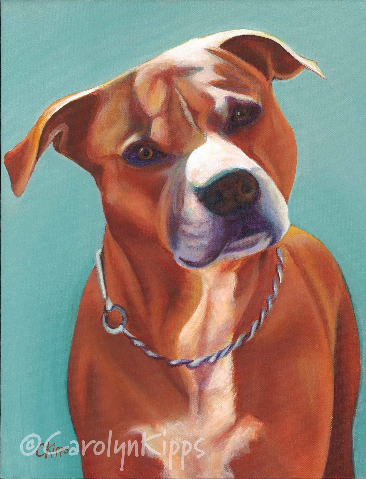 Tommy, pit bull